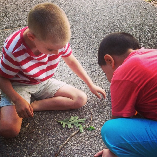 Play date with an old friend. We originally bonded as international families. K's friend is 1/2 Greek. Swapping international #travel tales while trying to feed caterpillars. #friends #boys #momofboys