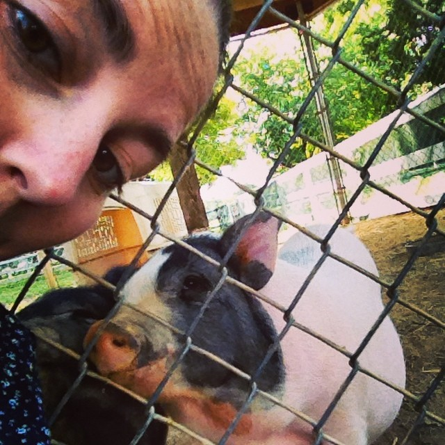 This park in #mankato is so nice and has a free petting zoo! #pigs #zoo #travel #kids
