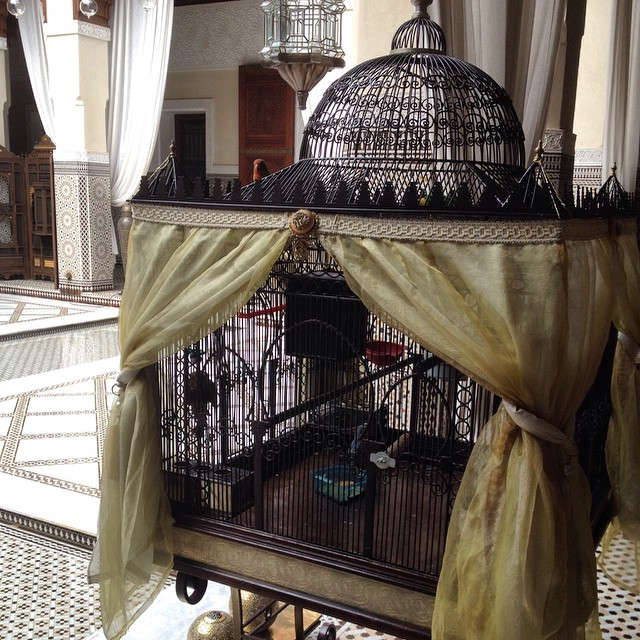 This is the lobby of @royalmansour isn't the cage beautiful? One bird has escaped but comes back to visit the others and flies between the cage and one of the gardens. He always comes back. #Marrakech #Morocco #hotel #luxury #birds #birdsofig #Glam