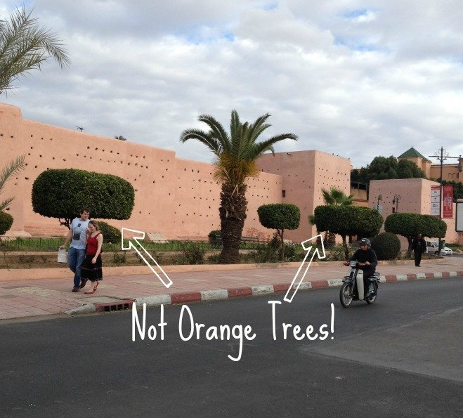 Orange Trees aren't Real Oranges