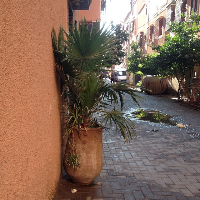 I live on this street. If you live in or have spent time in MENA you'll know what's strange about this picture. Can you guess? #nofilter #Marrakech #maroc #morocco #street #plants
