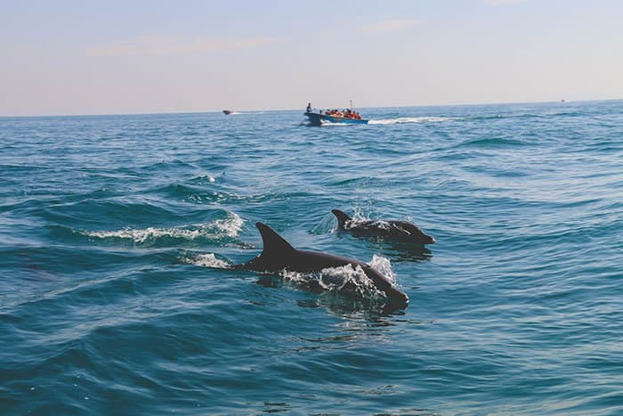 Dolphins in Iran