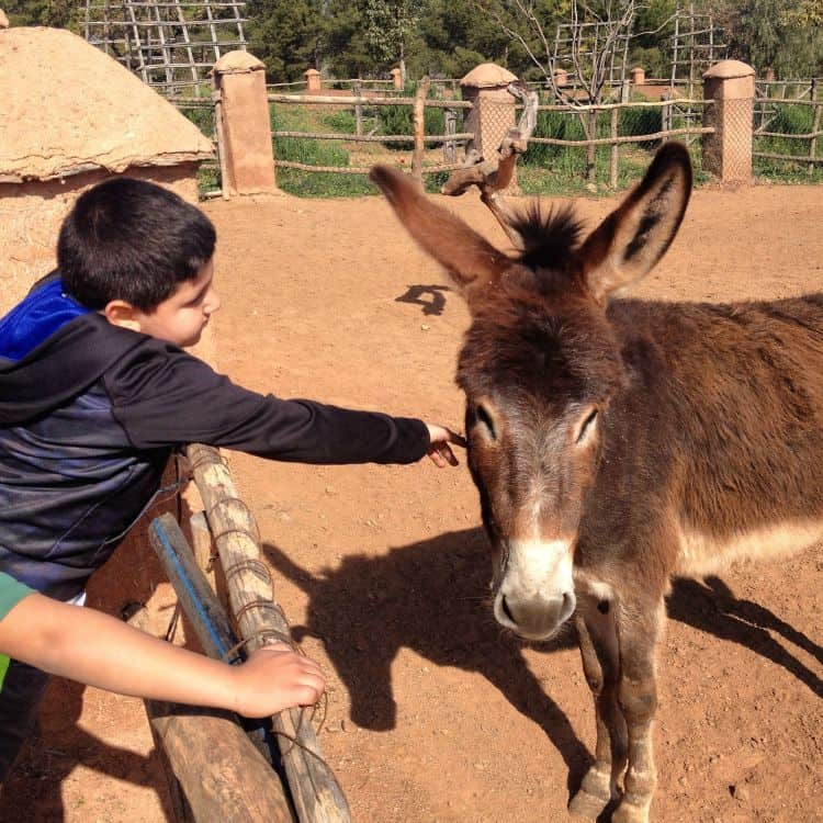Playing with Donkeys in the Mountains