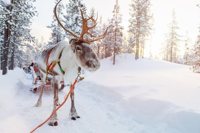 Lapland Finland with kids