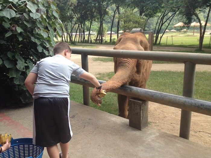 Feeding Elephants at Elephant Nature Park
