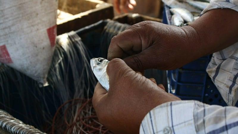 Baiting Lines in Essaouira