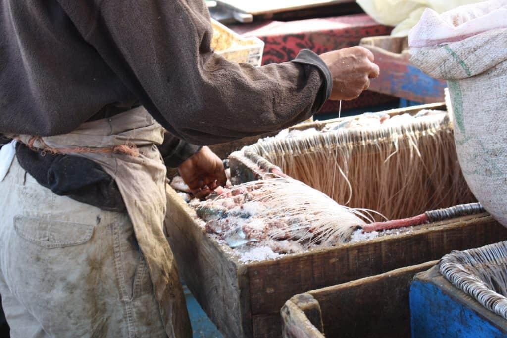 Tying Fishing Lines