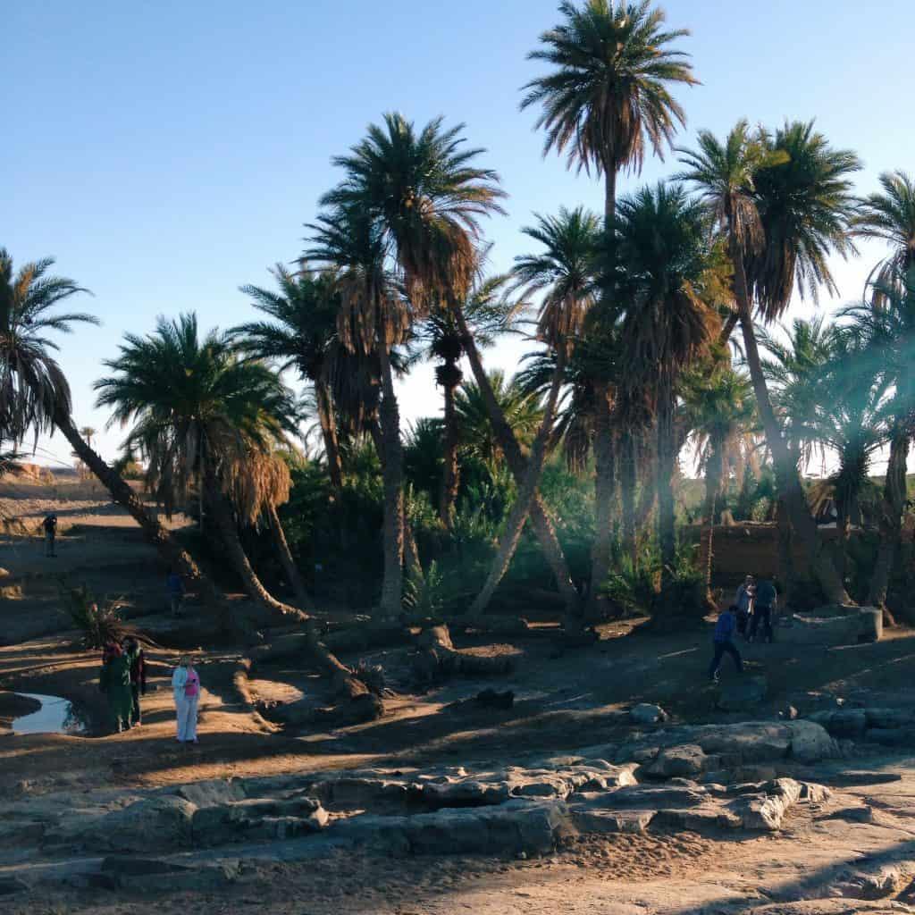Desert Oasis in the Sahara