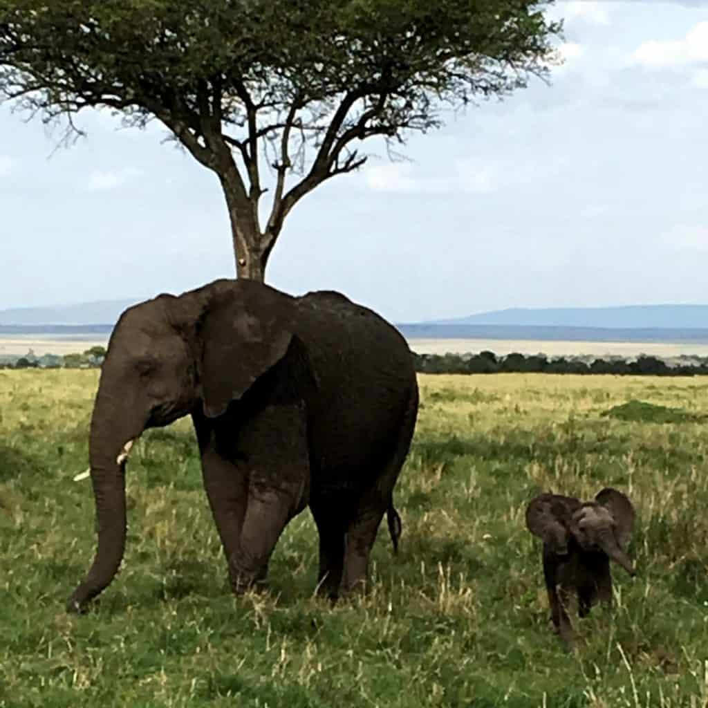 Mom and Baby Elephant in Masai Mara