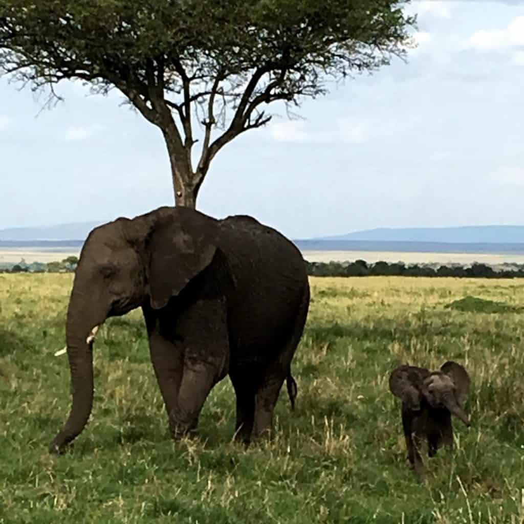 Mom and Baby Elephant in Masai Mara