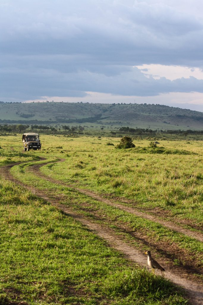 Safari in the Masai Mara