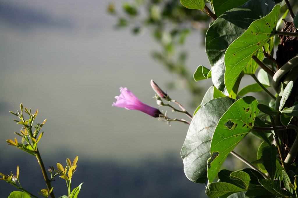 Natural flora and fauna in Kenya