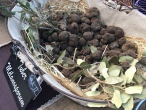 Truffles at Market in Southern France