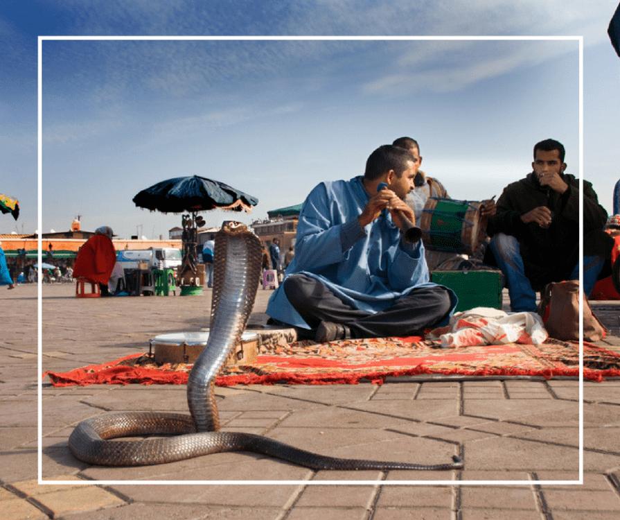 Snake Charmer Scam