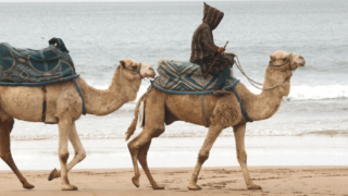 Discovering the Agadir to Essaouira Coastline