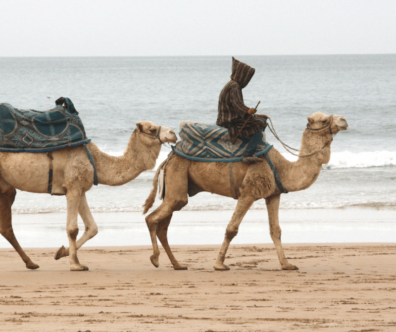 man on a camel in Morocco