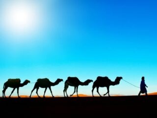 Camel Expeditions in Morocco COVER