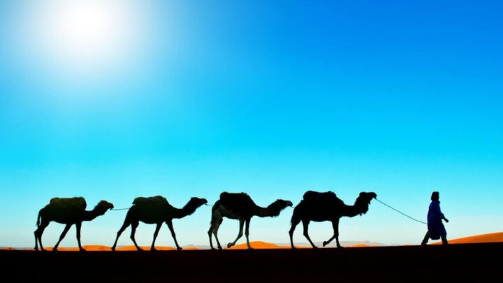 A Moroccan Camel Expedition: You Can't Beat the Desert