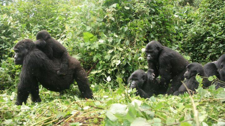 Rwanda's Cultural Heritage: Beyond the Gorillas