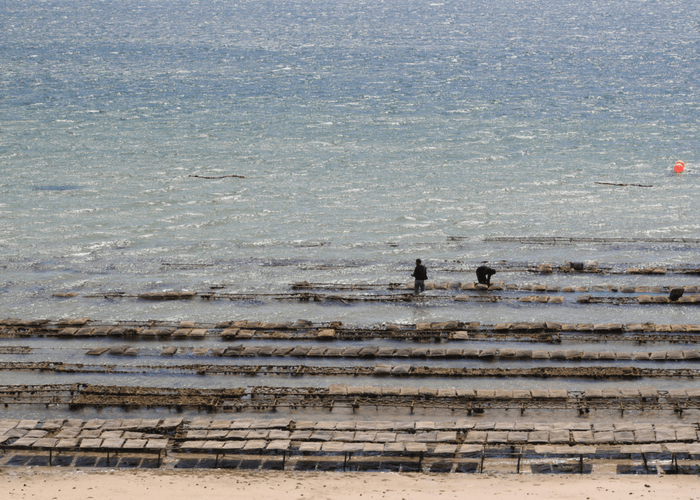 The Oyster Farm in Dakhla