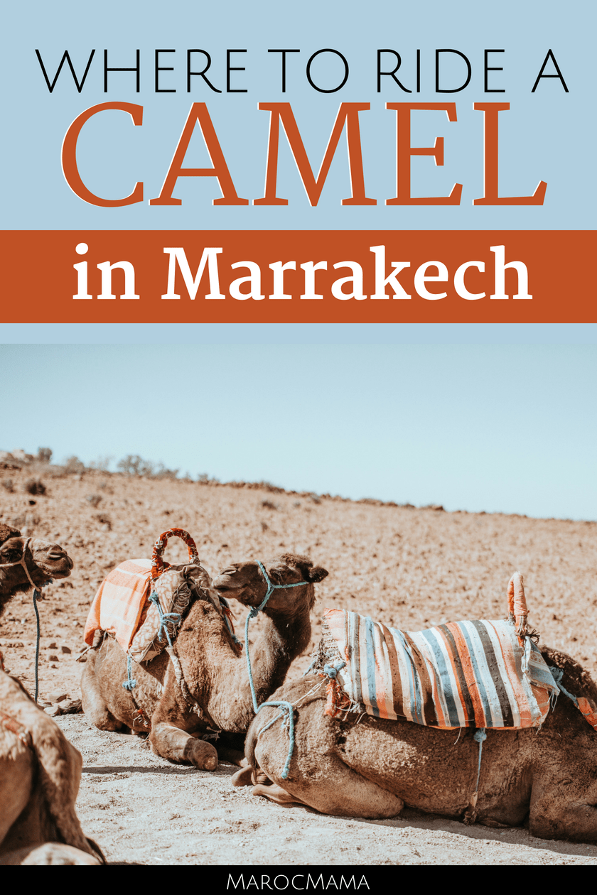 Where to ride a camel in Marrakech