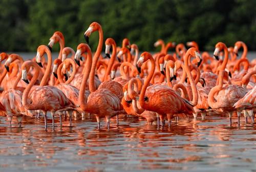 Flamingos in a lagoon