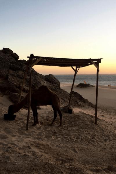 Moroccan Beaches