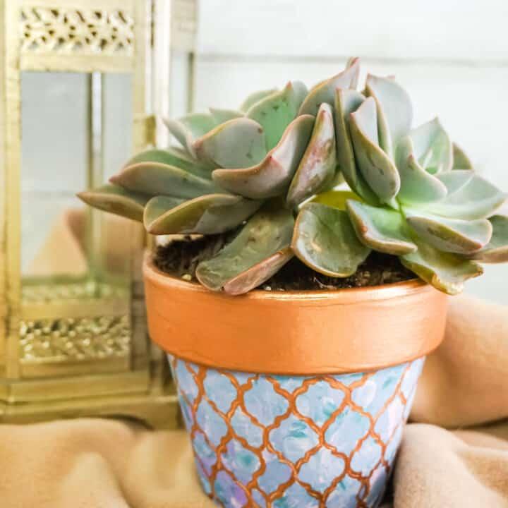 Succulent Painted Pot Project