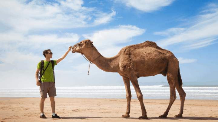 What is the best way to visit Morocco for YOU?