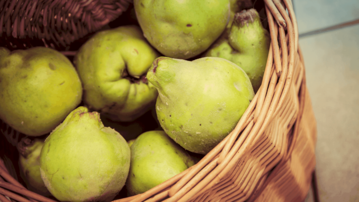 Amazing Quince Fruit Recipes You Should Try this Fall
