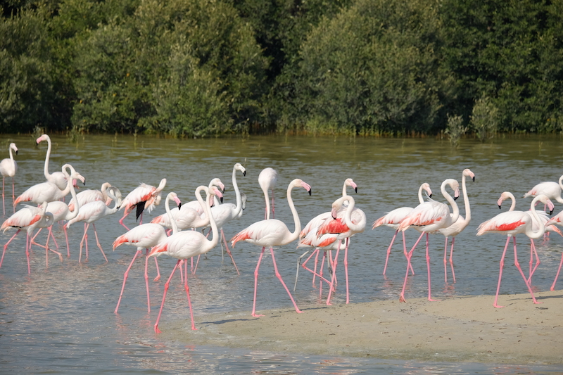A group of flamingos stands in water