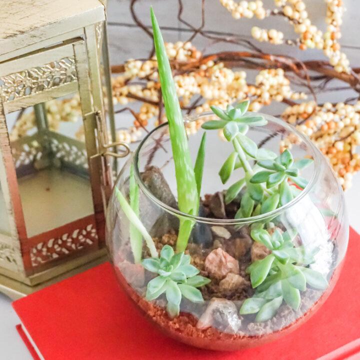 DIY: Morocco Desert Terrariums