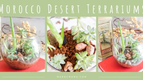 Make Your Own Moroccan Desert Terrarium!