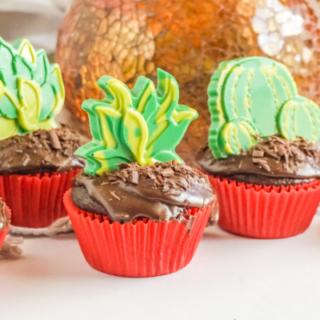 Succulent Chocolate Cupcakes