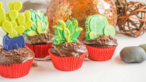 Succulent Chocolate Cupcakes with Edible Toppers