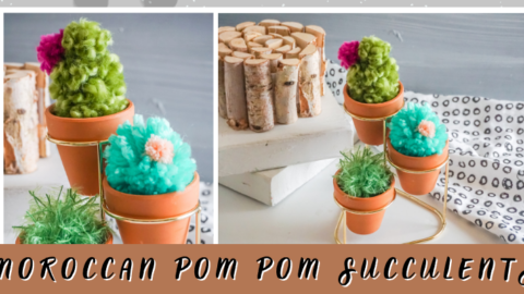 Moroccan Pom Pom Succulents